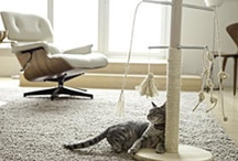 DIY Pet Projects and Ideas / by Kee Catz