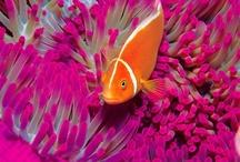 Amazingly beautiful Animals & More