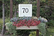 garden / by koyu