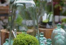 Green / Sérénité verte
