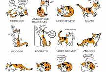 Come capire gli animali
