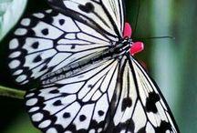 [Butterfly]