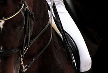Equestrian Sport / equestrian, horses, horse riding equipment fotos
