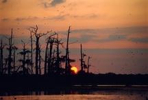 Born On The Bayou~Sweet Home Louisiana <3 / by Darnell Hebert