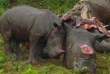 Stop Animal Cruelty! / by Kiki Marmol Guevara