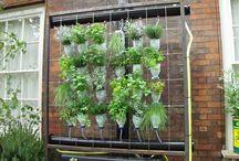 zöldnövényej