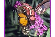 Butterflies Homeschool