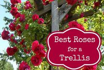 for my climbing roses at the front
