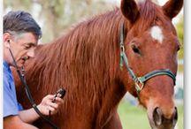 http://www.fairchildcuttinghorses.com
