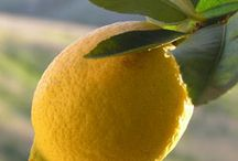 Lemon / by Stephanie Gillham