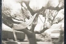 Polaroids / by Shauna Nep