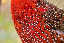 exotic birds beautiful and delicious