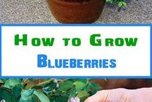Growing fruits and vegetables