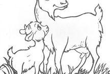 domace zvieratá