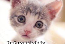 Cat's speaking