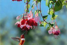 Birds and flowers  / by Renee Hensley