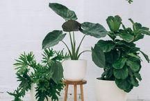 Indoor Plant Lover / Mijn liefde voor indoor planten en een botanische woonstyle