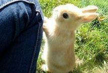 Rabbits / Adorable rabbits