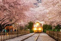 Japan / Foto dal Giappone - Pictures from Japan