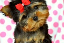 Dogs / Family pets and others I like