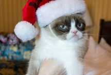 Grumpy Cat / I love this cat! She had to have her own board!