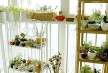 plantas,cactus,entre otros