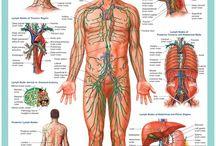Gesundheit Körper