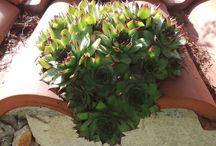 Vet plantjes