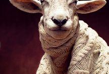 Sheeps (owce)