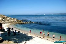 Beautiful Monterey! / Famously beautiful, its 455 square miles nurture one of the most diverse ecosystems in the world, including dozens of species of marine mammals, still more of seabirds, hundreds of species of fish, and one of the largest kelp forests in the world. / by Hyatt Regency Monterey Hotel And Spa