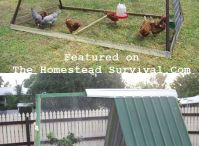 Chicken Coop Ideas & Plans / DIY Chicken Coops / by Childhood Cancer Awareness