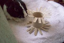 Rabbit Ideas for Bennie and Nibbles / We recently got 2 lovely bunnies that the older two children have taken charge of.  Lots of ideas for homemade toys and interesting play areas.