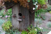 Fairy Gardens / by Kathy Costello