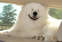 Smiling Creatures / Smiles across the animal world.