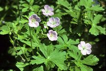 wildflowers/plants