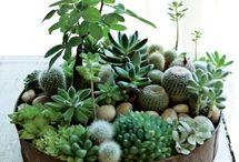 garden + indoor plants.