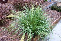 House - Plants for Tropical / Native Garden