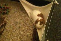 Guinea pig cage diy