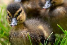 Olika vackra fåglar i världen