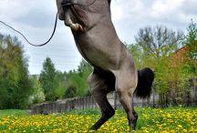 Arabian rearing !!