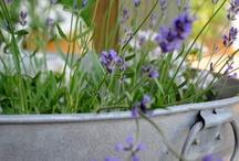 ♡ Garden ideas / by ♡ Isobel Van Den Bosch