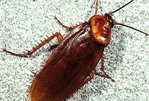 Pests How to Rid them