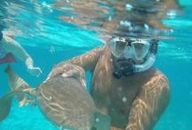 Belize Scuba Diving / Scuba Diving in Belize- dive packages offered by Blue Tang Inn, San Pedro Town, Ambergris Caye, Belize