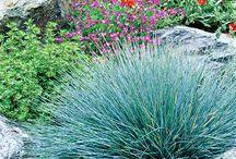 Grasses / Grasses for your garden
