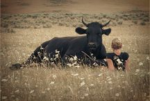 LUDZIE I ZWIERZĘTA / Zadziwiające jak ludzie potrafią się zbliżyć do zwierząt albo raczej zwierzęta do ludzi...