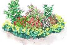 Small flowergarden