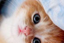 Mauu / Cats