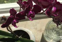 Zalievanie orchidei