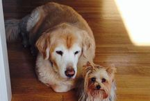 Furry Friends / by Misty Ray Vaughn