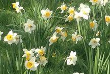 Spring Gardens / Spring gardens.
